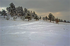 Mt. Falcon in Snow
