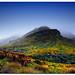 Misty Mount Zeus... by Chantal Steyn