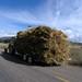 Transporting oats - Cargando avena; al sur de Suchil, Zacatecas, Mexico por Lon&Queta