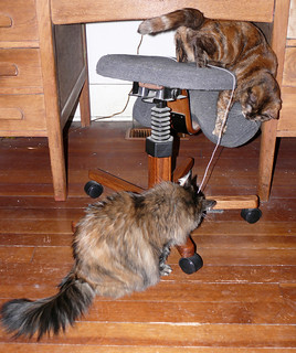 Stella and Maxine Study String Theory