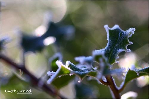Happy Bokeh Winterday!!