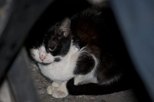 可爱小猫图片黑白