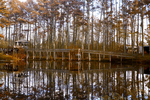 bridge trees georgia landscape natural