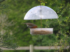 tool(0.0), bluebird(0.0), perching bird(1.0), branch(1.0), fauna(1.0), bird feeder(1.0), wildlife(1.0),
