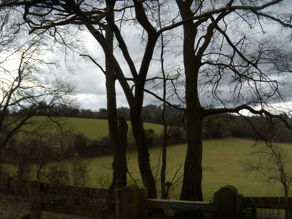 Trees, view Little Kimble to Saunderton