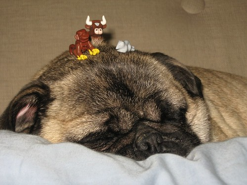 LEGO animals on my pug