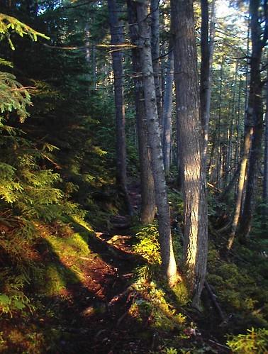 forest moss maine falls trail gorge daybreak littlewilson