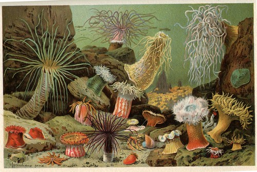 sea anemones by dd21207
