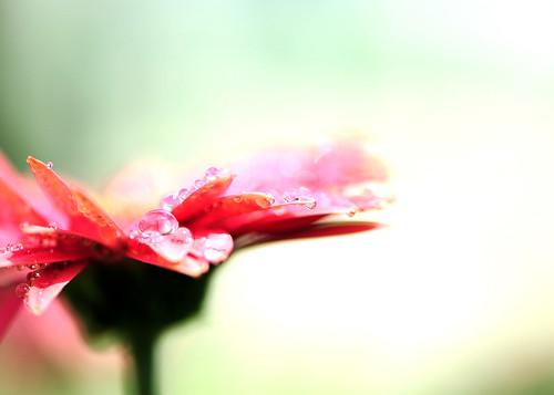 sunshine gerbera daisy cgb thankyoumywonderfulfriend happycheerfulnewweektoyoudearge