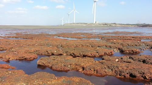 桃園藻礁多處被工業汙染,造成礁體被侵蝕、生態死寂的慘狀。