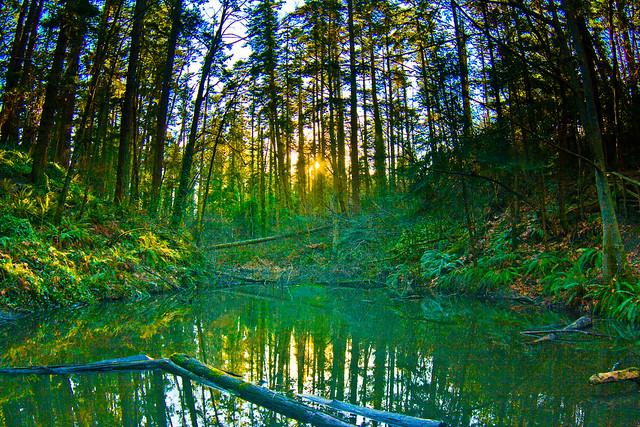 Mystic Vale Pond