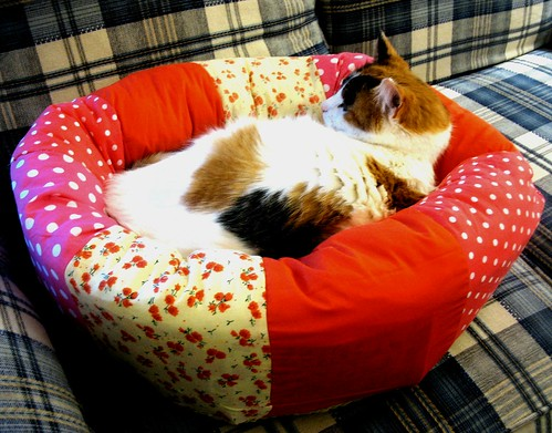 homemade cat bed