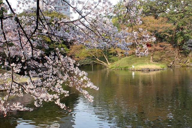 Sakura - 12