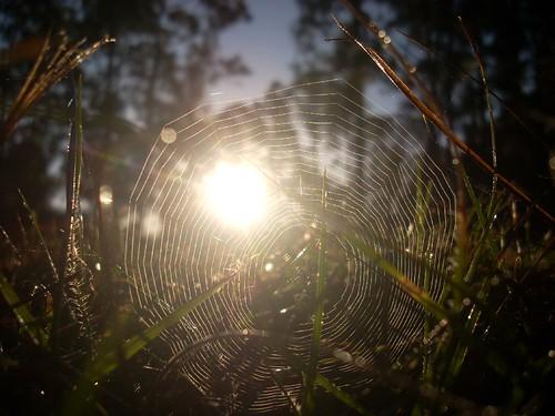 nature clouds sunrise photography spider florida web spiderweb dew fl