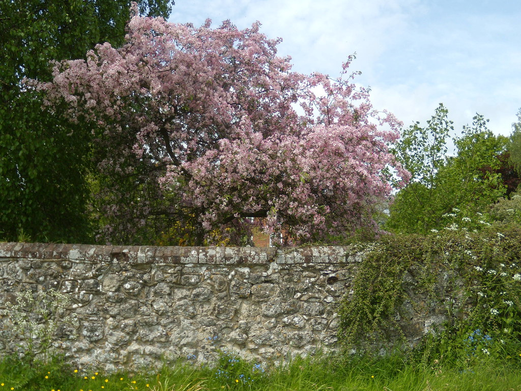 Pink stuff and wall Pluckley Circular with extension