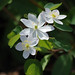 Rue Anemone - Photo (c) Christine and John Fournier, some rights reserved (CC BY-NC-SA)