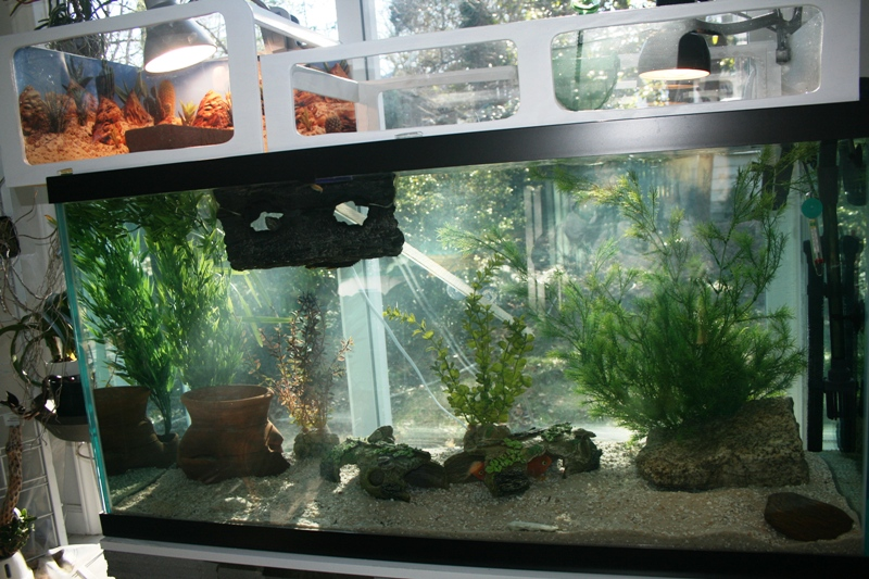 Turtle tank 90 gallon zilla 90 gallon turtle tank for Fish pond setup