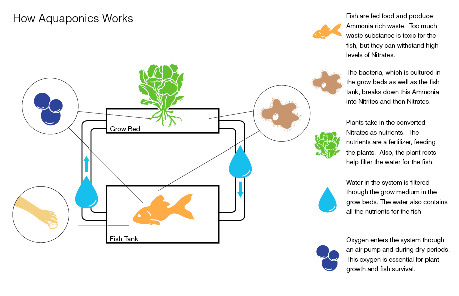 Aquaponics systems what is aquaponics for Hydroponic raft system design