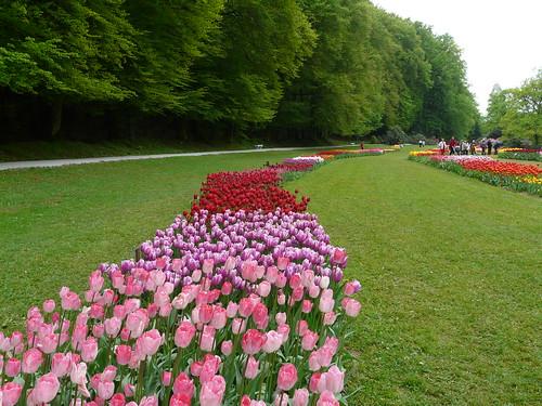 percorsi di tulip