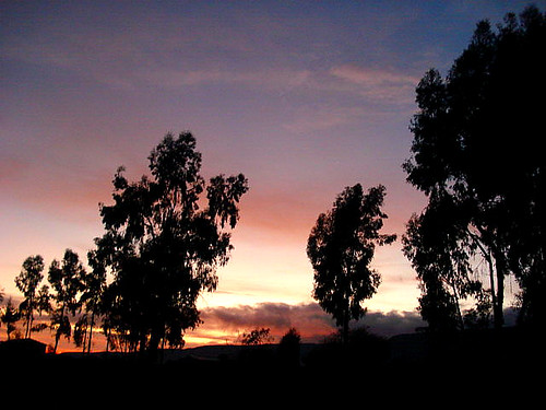 sunset house tree arboles