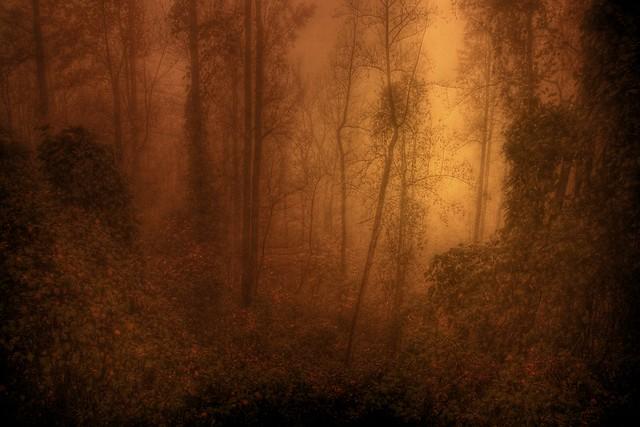 Misty Wood of Twilight
