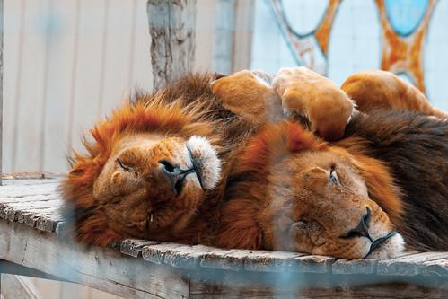 Nap Time! by Dr. Ilia