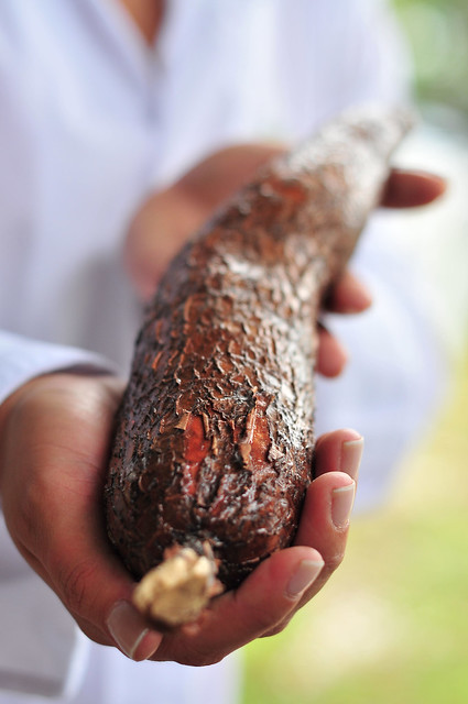 cassava root2