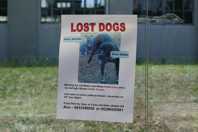 Sydney Lost Dogs Home