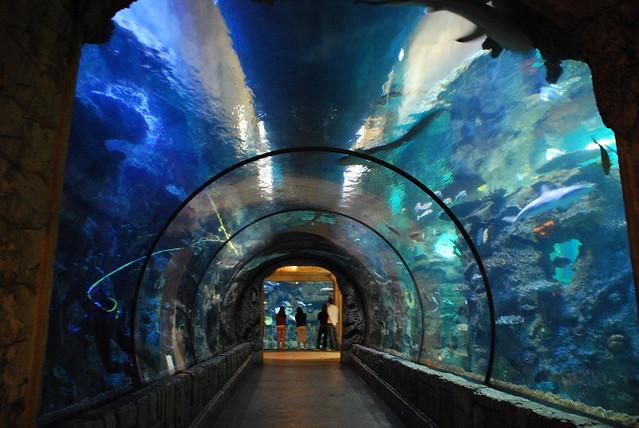 Tunnel Shark Reef Aquarium At Mandalay Bay By