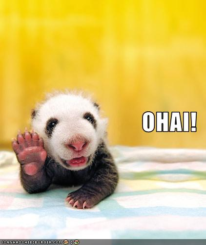 funny-pictures-this-baby-panda-bids-you-hello