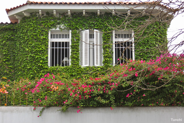 Plantas ornamentales arbolitos taringa for Concepto de plantas ornamentales