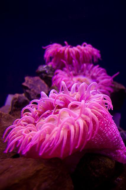 Image Result For Jenks Aquarium
