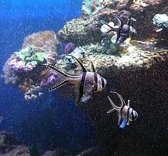 Stockholm Aquarium