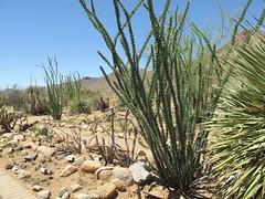 date palm(0.0), arecales(0.0), flower(0.0), garden(0.0), tree(0.0), grass(1.0), flora(1.0), agave azul(1.0), landscape(1.0), vegetation(1.0),