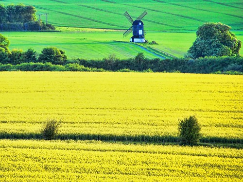 Rapeseed and Windmill  -- Yes! That yellow time of year has arrived  here.