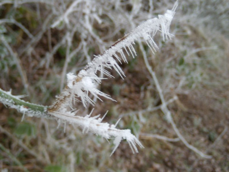 Frosty needles Wanborough to Godalming
