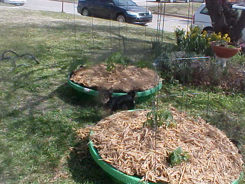 Pools Planted, Mulched, Trellised with Itzl