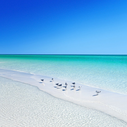 ocean blue sea vacation sky usa white house holiday reflection green bird beach gulfofmexico animals square coast seaside sand waves gulf unitedstates florida turquoise south horizon cyan wave clean southern sit refraction environment rest fl sands sandpiper destin caustics emerald seabird gulfcoast deepsouth miramarbeach cear