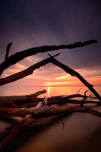 longexposure morning trees color tree colors clouds sunrise dawn decay maryland chesapeake chesapeakebay