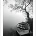 Niebla matutina by Rafa Herrero