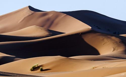 Lumière rasante sur les dunes de Merzouga, Maroc.