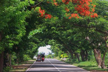GREEN CANOPY by flickr user Tonee Despojo
