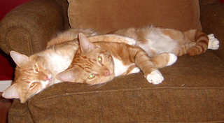 20090619 - GEDC0047 - Oranjello, Lemonjello - OJ laying with arm around LJ