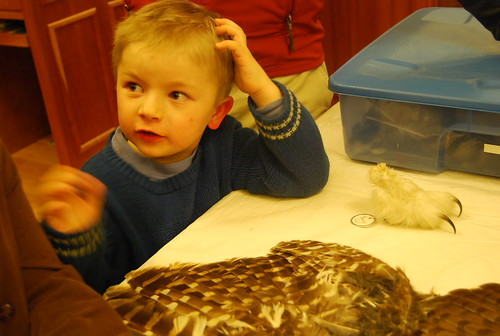 learning about owls