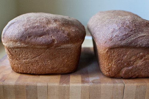 Everyday 100% Whole Wheat Sandwich Bread (2 of 5)