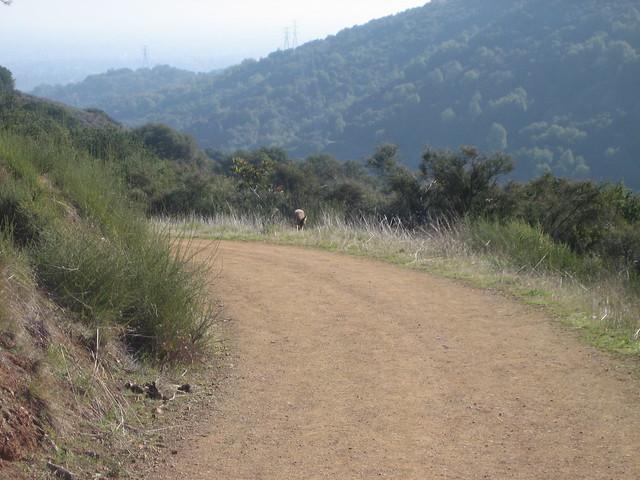 coyote sunglasses  pg&e trail coyote