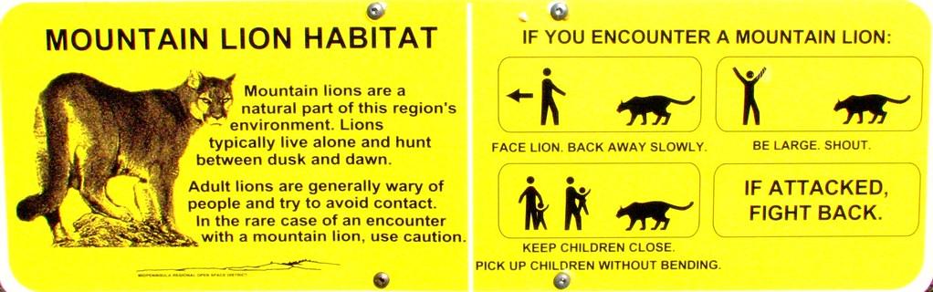 U S Mountain Lion Population Mountain Lion H...