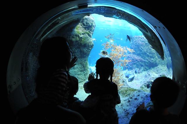 Shin-Enoshima Aquarium(2008.8.23) - 059
