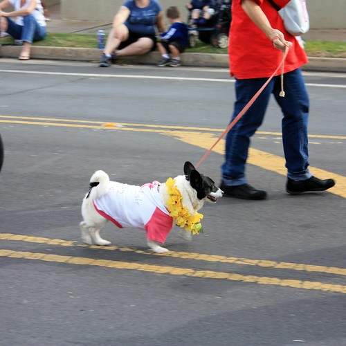 Even pets get to participate in the annual Whale Day Parade.