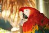 Natalia Robba Photography = Parrot @ San Diego Zoo